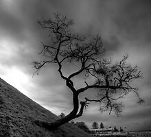 the tree by ralphyboy