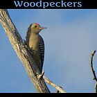 Woodpeckers by Kimberly P-Chadwick