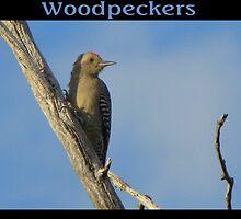 Woodpeckers by Kimberly Chadwick