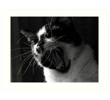 Jack the Cat Yawn 2 Art Print