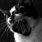 Jack the Cat Yawn 2 by Kat Goetting