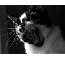 Jack the Cat Yawn 2 Photographic Print