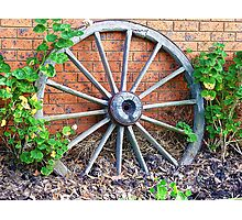 Wagon wheel - handy for plant climber - Kirkstall, Vic. Photographic Print