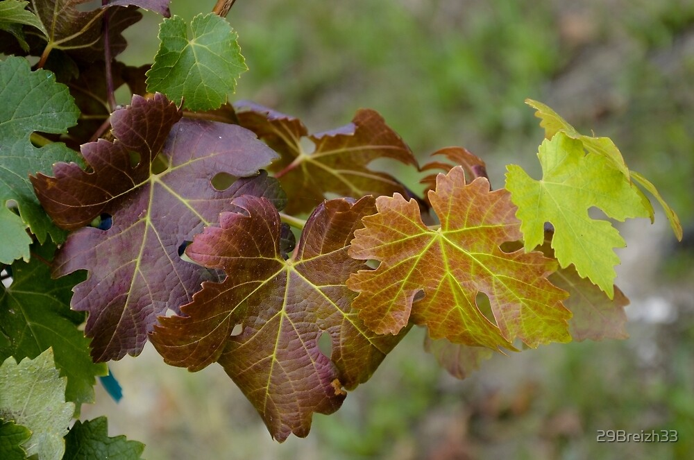 Vine leaves nuance by 29Breizh33