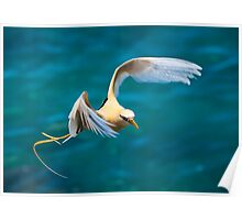 Golden Bosun In Flight_3 Poster