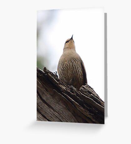 Brown Treecreeper Greeting Card