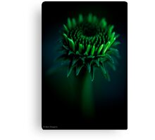 Laying on the grass in the backyard counting the stars Canvas Print