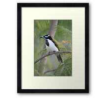 Blue-faced Honeyeater Framed Print