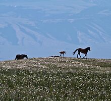 Wild Mustangs at Large #2 by Ken McElroy