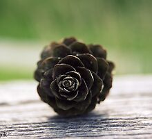 Lonely Pinecone by invisibletoall