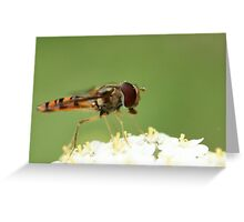 Harry the Hoverfly Greeting Card