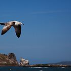 Sea Gull in flight by Stephen Lawlor