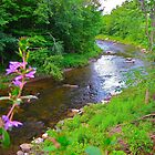 Deerfield River by Nancy Richard