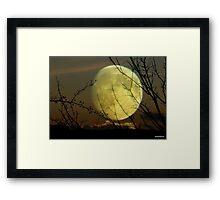 By Moonlight..... Framed Print