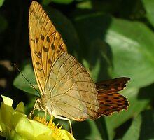 Butterfly and dahlia by Ana Belaj