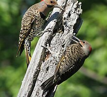 Flickers by MIRCEA COSTINA