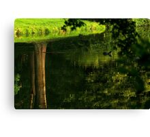 Coot's upside down water world Canvas Print