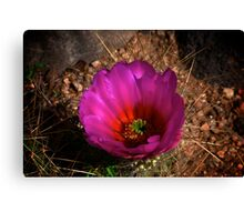 Cactus Flower 2011 #6 Canvas Print