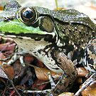 Full Framed Frog by sillyfrog