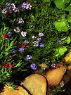 Butterfly Paradise by RC deWinter