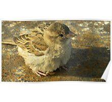 Tierische Tarnung - Little Bird Poster