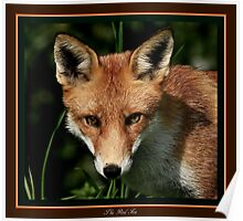 The Red Fox Poster