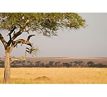 Branch with a view Photographic Print