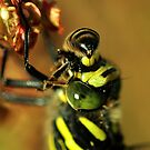 You wont sting me  by Russell Couch