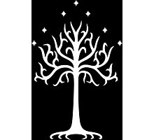 Lord of the Rings - White Tree of Gondor Photographic Print