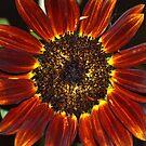 Copper Sunflower by Eileen Brymer