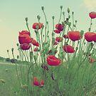 Ahhhh....Poppies!!! by rasim1
