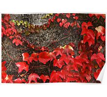 gleaming leaves Poster