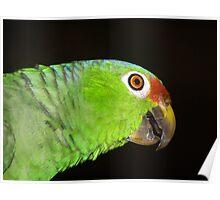 Parrot - Lora - shot 2 Poster