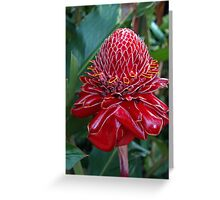 Torch Ginger, Costa Rica Greeting Card