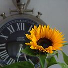 Zonnebloem (Sunflower) by Hans Bax