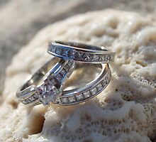 Rings placed on top of white coral from 7 mile beach, Grand Cayman  by Lbenn