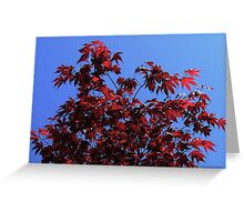 Maple Red Greeting Card
