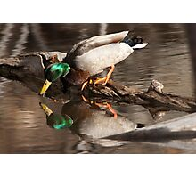 Duckkcud Photographic Print