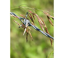 Caught Grass Photographic Print