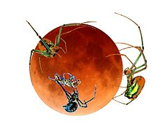 Halloween Blood Moon Ant vs Spider Horror  by KateLCardsNMore