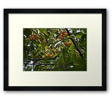 Rainier bumper crop Framed Print