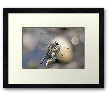 A Dash Of Light. Framed Print