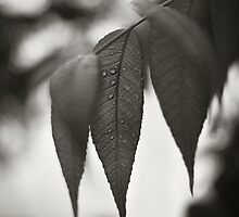 leaves_062311 by James Gehrt