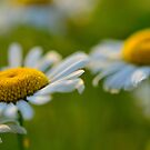 Morning Blooms by Christopher Gaines