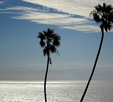 Palm trees on the ocean by trevorjh