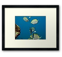 Life Under the Sea Framed Print