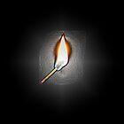 Flame by Omar Dakhane