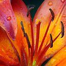 Raindrop Beauty by PatChristensen