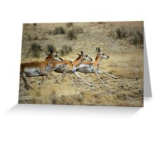 Antelope Wild and Free ~ Sierra Co, New Mexico Greeting Card