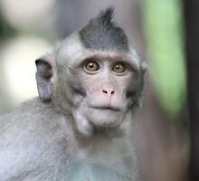 Wise Monkey by byronbackyard